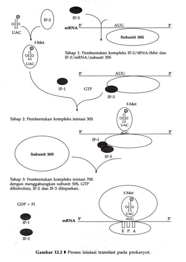 Skema translasi kamrianti ramli pemanjangan elongation ccuart Images