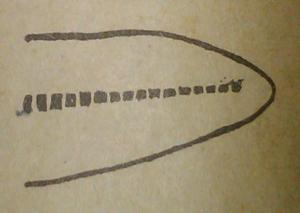 diphicercal