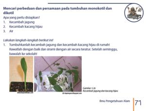 Mencari perbedaan tumbuhan monokotil dan dikotil